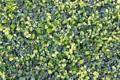 трава предпосылки зеленая Стоковые Изображения