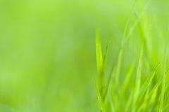 трава предпосылки Стоковые Изображения RF