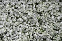 Трава предусматривала со слоем заморозка, взгляда сверху стоковая фотография