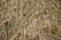 Трава прерии стоковое изображение rf