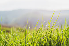 Трава, предпосылка, зеленый цвет, природа, весна, лужайка, лето, рост, утро Стоковое Изображение