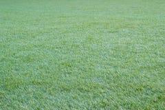 Трава природы зеленая в саде стоковое фото rf