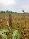 Трава природы стоковые фото