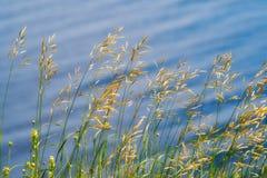 Трава против воды Справочная информация стоковое фото rf