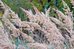 Трава против солнца стоковое фото rf
