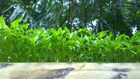 Трава пука Стоковое Изображение RF