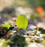 Трава пускать ростии Макрос Стоковое Изображение RF