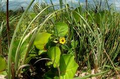 Трава пляжа с цветками Стоковые Изображения RF
