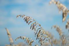 Трава пляжа Стоковые Фотографии RF