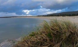 Трава пляжа Стоковое фото RF