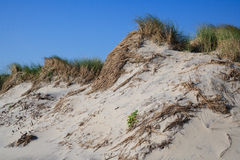 Трава развевает на песчанных дюнах Oceanfront Стоковая Фотография RF