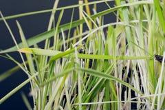 трава разрушения Стоковые Фотографии RF