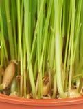 Трава растет в баке : стоковое изображение rf