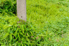 трава растет overgrown поляки цемента Стоковая Фотография RF