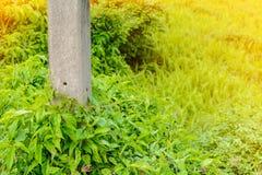 трава растет overgrown поляки цемента Стоковое Изображение RF