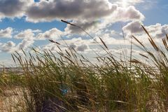 Трава растя в песках Стоковая Фотография RF