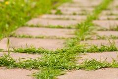 Трава растя в плитках в парке Стоковые Изображения