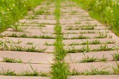 Трава растя в плитках в парке Стоковые Фотографии RF