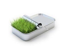 Трава растя из жестяной коробки Стоковые Изображения RF
