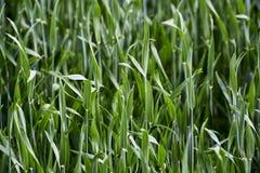 Трава растя на поле Стоковые Фото