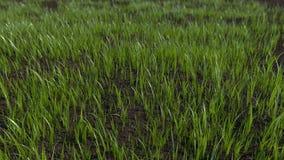 Трава растя промежуток времени 4K