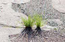 Трава растя через землю Стоковая Фотография RF