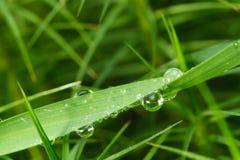 трава росы детали стоковые изображения