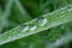 трава росы Стоковые Изображения