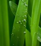 трава росы Стоковое фото RF