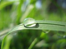 трава росы Стоковые Изображения RF