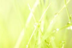 трава росы Стоковое Изображение