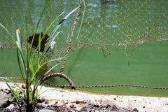 Трава рядом с прудом стоковые фото