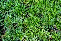 трава сада цветка малая Стоковая Фотография RF