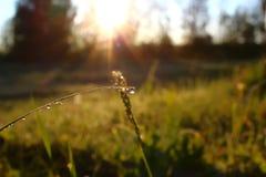 Трава Свежая зеленая трава весны с крупным планом падений росы Стоковые Изображения RF