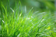 Трава свежей весны зеленая в солнечном свете Стоковые Изображения RF
