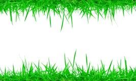 Трава свежей весны зеленая на белой предпосылке стоковое изображение