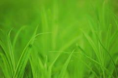 Трава свежей весны зеленая Стоковая Фотография
