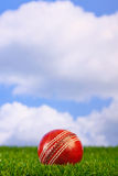 трава сверчка шарика Стоковая Фотография RF