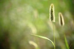 Зеленая трава весной Стоковые Изображения