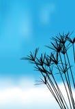 Трава силуэта вектора для предпосылки Стоковая Фотография