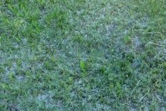 Трава смешанная с пушком тополя зеленый цвет выходит текстура картины природы Стоковые Изображения RF