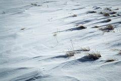 Трава смотря нас из-под снега Стоковое Фото