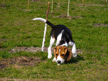 трава собаки 01 Стоковая Фотография RF
