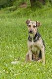 трава собаки стоковое изображение rf