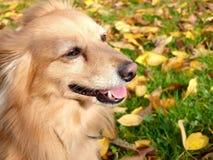 трава собаки Стоковая Фотография