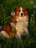 трава собаки Стоковое Фото