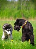 трава собак сидя 2 Стоковое Изображение RF