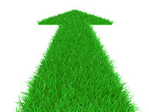 трава сразу стрелкой вверх Стоковые Изображения RF