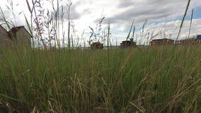 Трава степи пошатывая в ветре в дневном свете видеоматериал