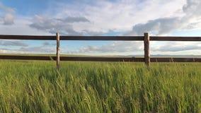 Трава степи пошатывая в ветре в дневном свете акции видеоматериалы